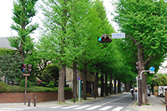 世田谷区のイメージ01