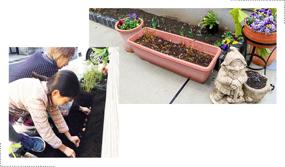 冬、おばぁちゃんと一緒にチューリップの球根を植えました。